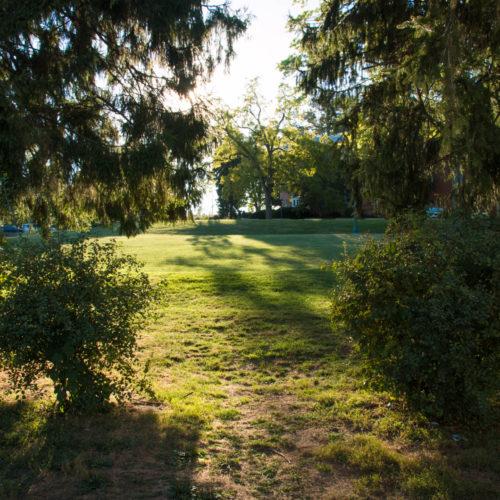 Prelude Field
