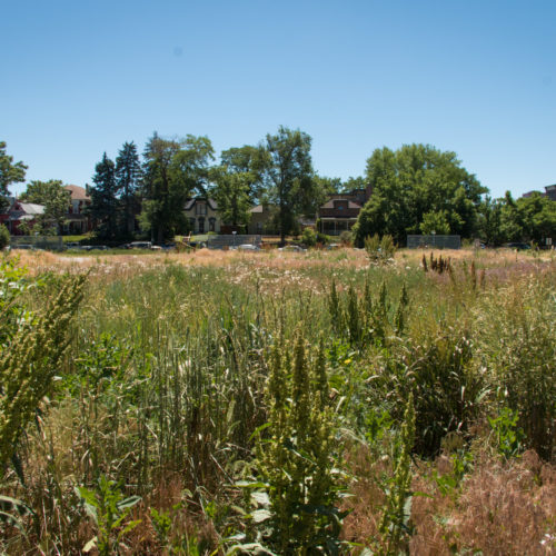 Cosmopolitan Urban Meadow