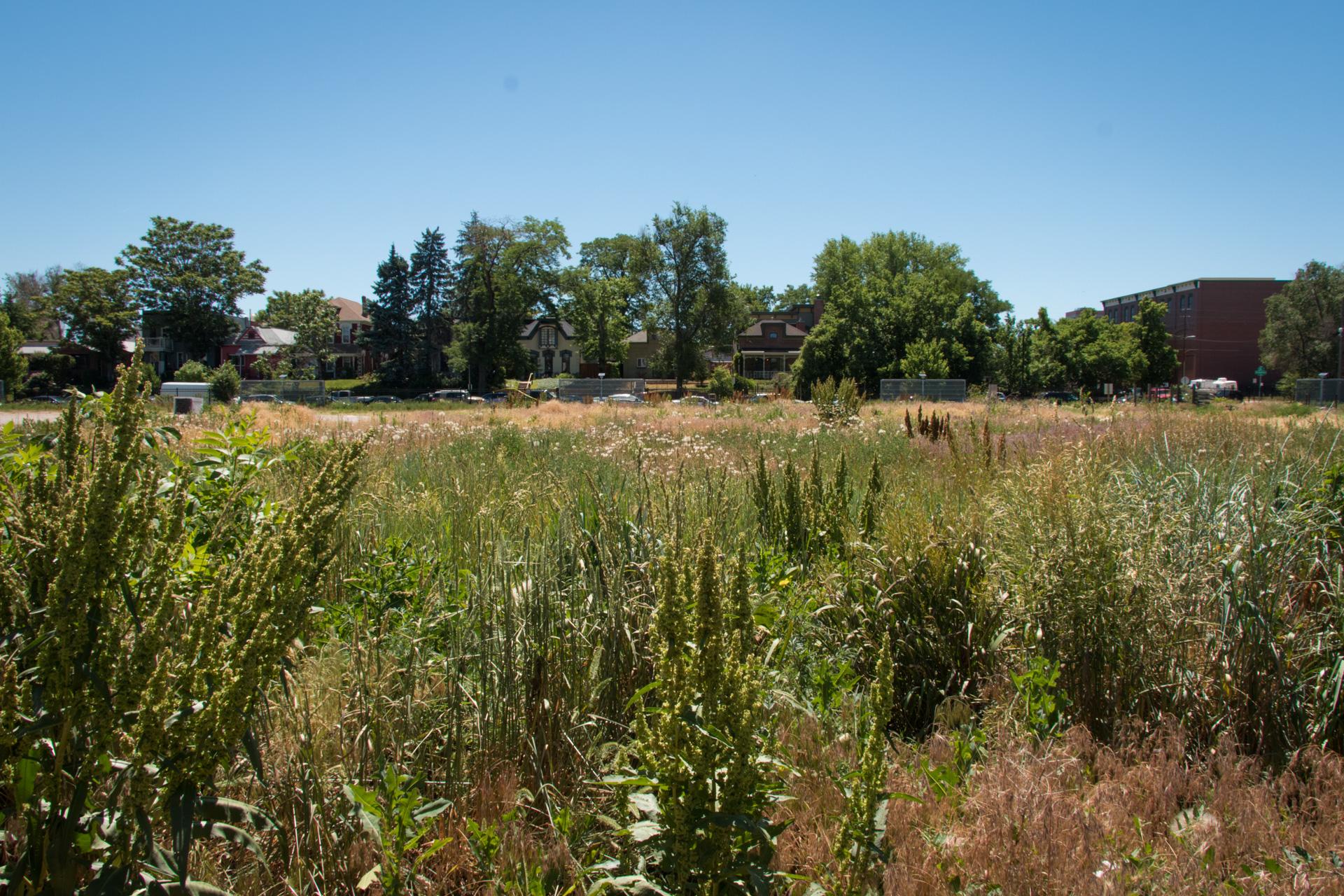 Cosmopolitan Urban Meadow