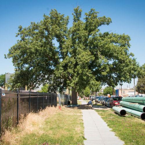 Sanctuary Tree